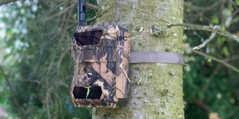 Ranking fotopułapek: 3 najlepsze kamery leśne w 2021 roku