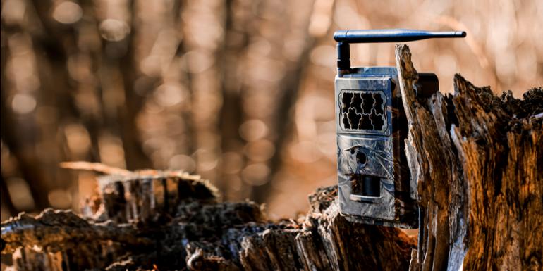 Jaką wybrać fotopułapkę – standardową czy szerokokątną?